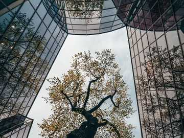 glass wall - glass walls with a tree