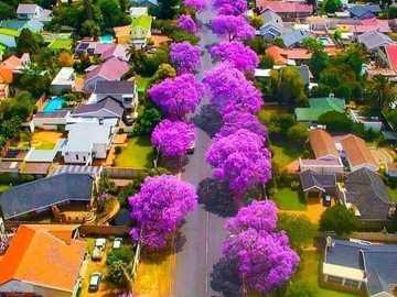 Johannesburg, Südafrika - Boulevard in Johannesburg, Südafrika