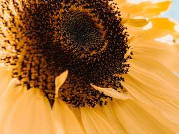 Blume - gelbe Blume mit brauner Mitte