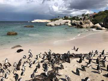 Penguins - m .....................