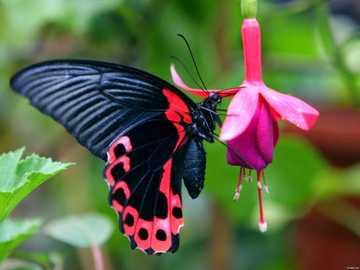 motylek na kwiatku - m...................