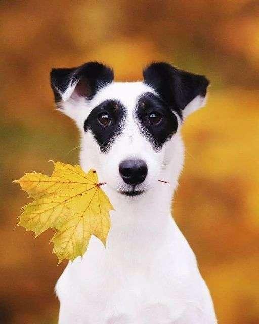 séance photo à l'automne