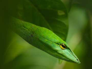 Grüne Schlange auf Blattpflanze - Nahaufnahme Fotografie der grünen Schlange.