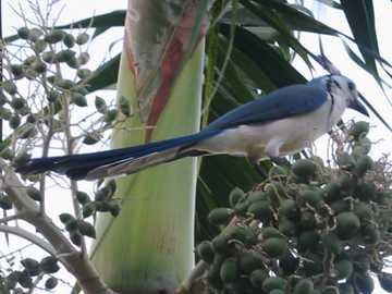 Faune - Amérique centrale de la faune