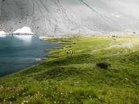 grüne Wiese und Gewässer - Zwei Wanderer und ein See in den Schweizer Bergen. Arosa, Schweiz