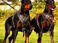 hermosos perros delgados