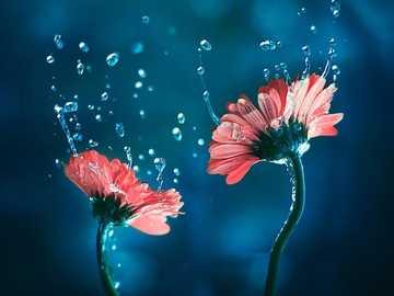 kwiaty jak ze snu - m...................