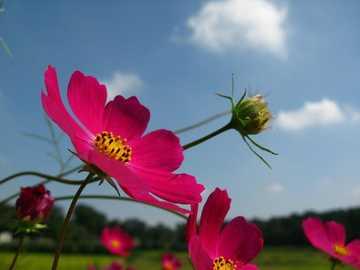 kosmosluftige Blumen - m ...................