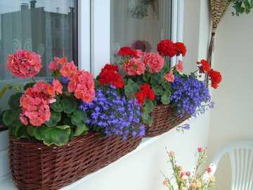 Blumen auf dem Balkon - m ....................