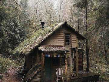 House in the woods - House in the woods as we dream