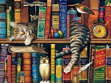 Dreaming on the bookshelf - Dreaming on the bookshelf