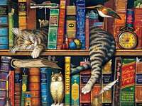 Dreaming on the bookshelf - Dreaming on the bookshelf