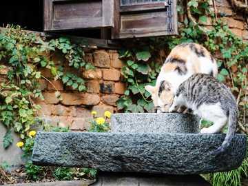 curious kitties - curious kitties in a stone bowl