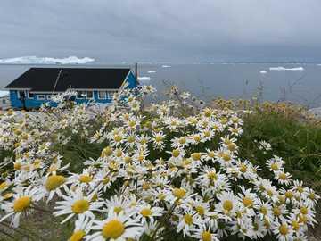 Niebieski dom z kwiatami nad morzem na Grenlandii - Niebieski dom z kwiatami nad morzem na Grenlandii