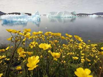 Formacje lodowe przed Grenlandią i kwitnące kwiaty - Formacje lodowe przed Grenlandią i kwitnące kwiaty