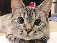 fissando gattino - m ...........................