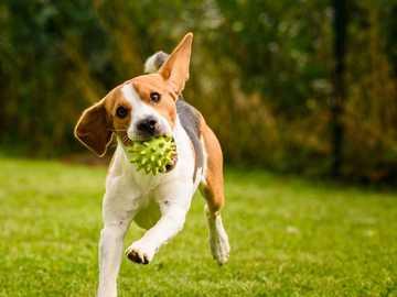 παίζοντας μικρό σκυλί - Μ ...........................