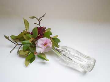 różowe i białe kwiaty w przezroczystym szklanym wazonie - Stara butelka Coca Coli to idealny wazon na świeże kwiaty.