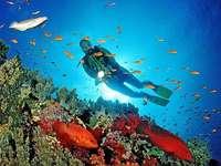 recife de coral no egito
