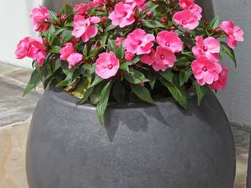 Blumen in einem Topf - m ......................