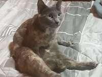 Michi met een ashuid