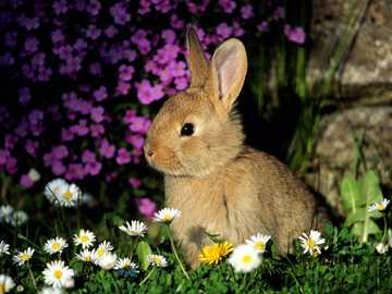 bunny - This picture shows a beautiful bunny