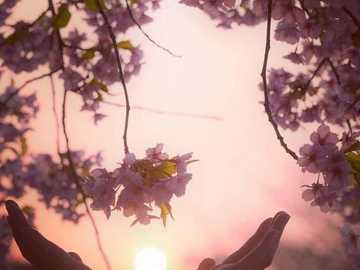 coucher de soleil à deux mains - coucher de soleil à deux mains ........................