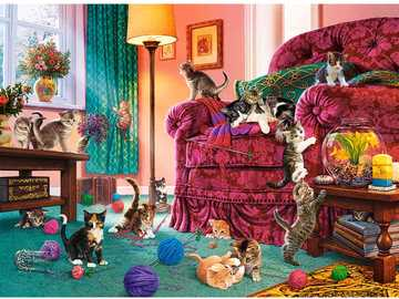Cat chaos in the room - Cat chaos in the room