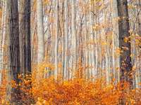 barna levelű fák nappal