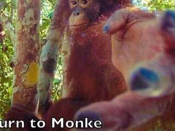 Retours de singe - Le singe vit, rejette ta vie