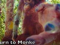 Επιστρέφει ο μαϊμού - Ο μαϊμού ζει, απορρίψτε τη ζωή σας