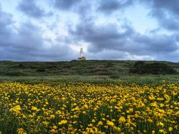 Lonely lighthouse - view photography of yellow-petaled flower field. Paphos, Cyprus