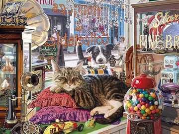 Katze Hund - Katze macht es sich gemütlich auf dem Kissen