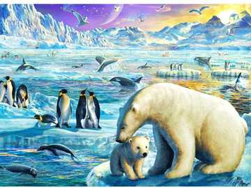 Arctic animals - Shows the animals that live in the north pole
