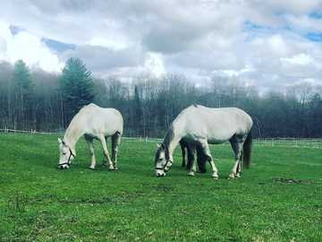 Two Lustano's in the Pasture - white horse on green grass field under white clouds and blue sky during daytime.