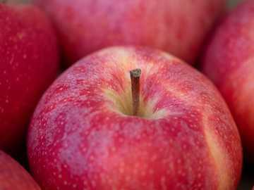 pommes rouges - pomme rouge sur textile rouge.