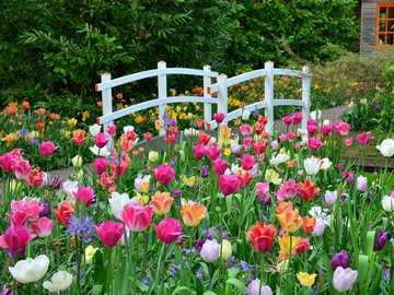 Giardino dei tulipani di Amsterdam - Giardino dei tulipani di Amsterdam