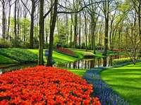 Paesaggio del giardino di Amsterdam Keukenhof