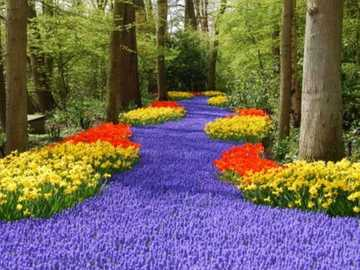 Paesaggio del giardino di Amsterdam Keukenhof - Paesaggio del giardino di Amsterdam Keukenhof