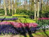 Paisaje del jardín de Amsterdam Keukenhof