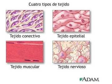 Types de tissus - ce puzzle est conçu en fonction des types de tissus