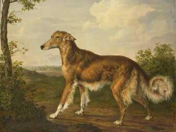 brauner und weißer langbeschichteter Hund auf braunem Sand - Titel: Sibirischer Windhund. Datum: 1825. Institution: Rijksmuseum. Anbieter: Rijksmuseum. Bereitste
