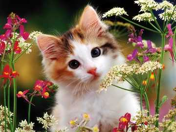 kitten in the meadow - n ..........................