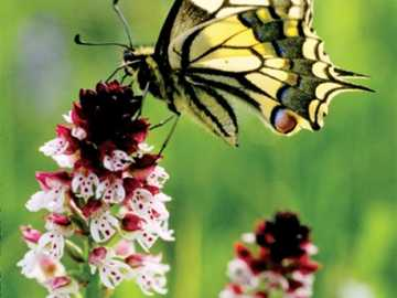 colorful butterfly on the flower - n ..........................