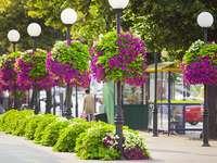 flores embelezam a rua - m ......................