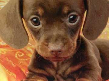 Ha very nice - What a pretty baby puppy