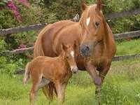 caballo animal lindo