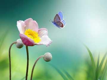 Blume auf der Wiese - m ..........................