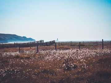 Trockenes Gras und weiße Blüten - Landschaftsfotografie des Bettes der weißen Blumen. Pointe de Brezellec, Cléden-Cap-Sizun, Frankre