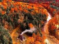 Um oásis de paz no meio de uma grande floresta